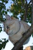 Chat tigré de point photographie stock