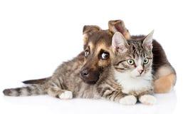 Chat tigré de race d'embrassement mélangé de chien D'isolement sur le fond blanc Photo stock