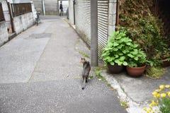 Chat tigré dedans en centre ville à Tokyo Photos libres de droits