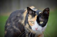 Chat tigré extérieur Photo stock