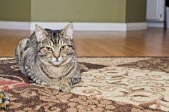 Chat tigré gris s'étendant sur le tapis Photo stock