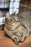 Chat tigré i Photo libre de droits