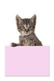 Chat tigré mignon de bébé tenant un carton rose Photos stock