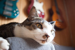 Chat tigré refroidissant en tant que tenir un coussin photo stock
