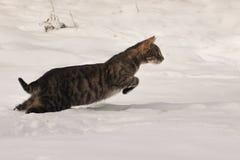 Chat tigré sautant dans la neige Photo libre de droits