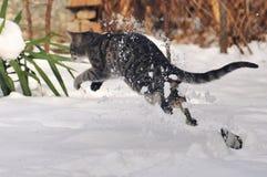 Chat tigré sautant dans la neige Image stock