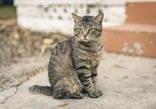 Chat tigré se reposant sur la rue de ciment Photos libres de droits