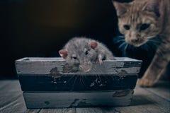 Chat tigré semblant curieux à un rongeur Images libres de droits