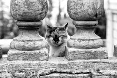 Chat tricolore Images stock