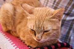 Chat triste images stock