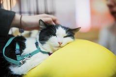 Chat triste se trouvant sur le grand oreiller jaune dans le traitement de attente de cage de la clinique vétérinaire Main des ess Photo stock