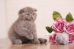 Chat Un chaton joue Jeu avec des fleurs Images stock