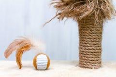 Chat utilisé rayant le poteau avec les pièces en lambeaux et la boule ronde de jouet avec des plumes photo stock
