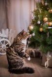 Chat, vacances de nouvelle année, Noël, arbre de Noël Photographie stock libre de droits