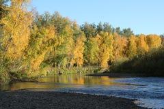 Chatanika flod i nedgång Arkivfoton