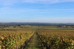 Chateau d`Yquem Wineyards. Wineyards of the world renowned Chateau d`Yquem in Sauternes, France stock photo
