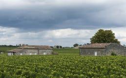 Chateau Guadet Vinyard Saint Emilion Royaltyfria Foton