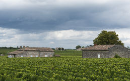 Chateau Guadet Vinyard Saint-Emilion Royalty Free Stock Photos