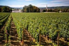 Chateau met wijngaarden, Bourgondië, Montrachet frankrijk royalty-vrije stock foto's