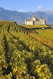 Chateau onder de wijngaarden royalty-vrije stock afbeelding