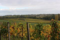 Wineyard during Autumn in St Emilion. Chateau Valandraud wineyards in St Emilion, France, during autumn Stock Photos