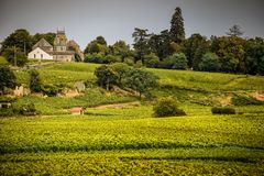 Chateau with vineyards, Burgundy, France stock image
