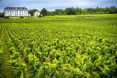 Chateau with vineyards, Burgundy, France. Burgundy, many chateau castle are surrounded by many acres of vineyards and are great wine producers stock images