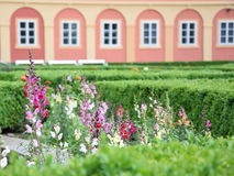 Chateaux garden. Flowers in the garden of a chateaux Stock Photography