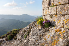 Chateau Peyrepertuse Languedoc France Stock Photos