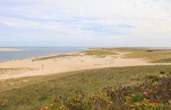 Chatham,与野生玫瑰的鳕鱼角海滩 图库摄影