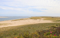 Chatham, plage de Cape Cod avec les roses sauvages photographie stock