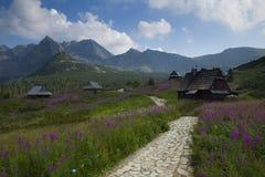 Chatki w Dolinie GÄ… siennicowej Royaltyfri Fotografi