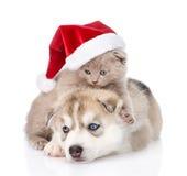 Chaton écossais et chiot de chien de traîneau sibérien avec le chapeau de Santa D'isolement Images libres de droits