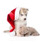 Chaton écossais et chiot de chien de traîneau sibérien avec le chapeau de Santa D'isolement Photos stock