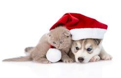 Chaton écossais et chiot de chien de traîneau sibérien avec le chapeau de Santa D'isolement sur le fond blanc Photo libre de droits