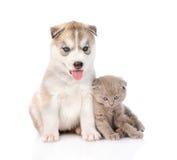 Chaton écossais et chiot de chien de traîneau sibérien ensemble D'isolement Photo libre de droits