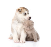 Chaton écossais et chiot de chien de traîneau sibérien se reposant ensemble D'isolement Photographie stock