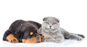 Chaton écossais et chiot de rottweiler de sommeil se trouvant ensemble Est Photographie stock libre de droits