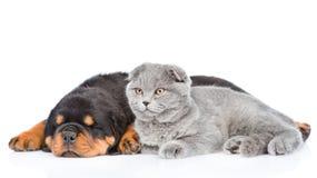 Chaton écossais et chiot de rottweiler de sommeil se trouvant ensemble Sur le blanc Photographie stock libre de droits