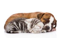 Chaton écossais et chiot dormant ensemble D'isolement sur le blanc image libre de droits