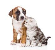 Chaton écossais et chiot regardant loin D'isolement sur le backgr blanc Photographie stock libre de droits