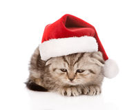 Chaton écossais triste avec le chapeau rouge de Santa Sur le blanc Photos stock