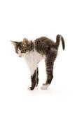chaton Images libres de droits