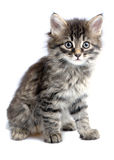 Chaton Images stock