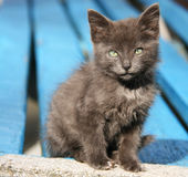Chaton Image stock