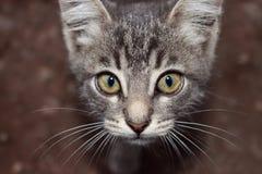 chaton Photographie stock