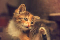 Chaton Photographie stock