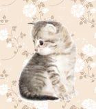 Chaton illustration stock