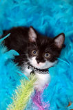 Chaton Photo stock