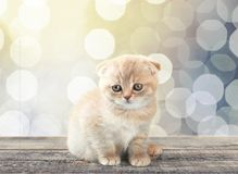 Chaton Photos stock